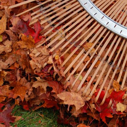Garden maintenance London