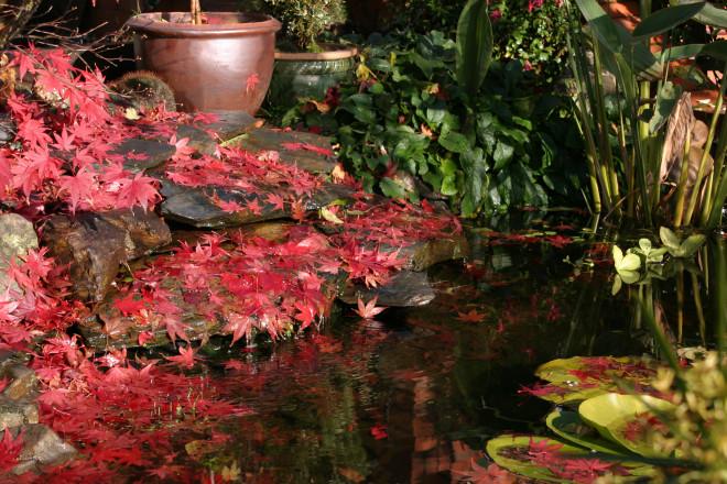 October garden care